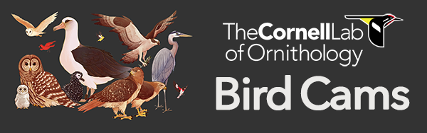 The Bird Cams Banner tha nicludes illustrations of birds seen on the cams, including an albatross and a bard owl.